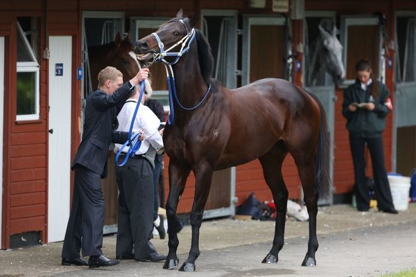 Horse Racing - Royal Ascot 2012 - Final Day Black Caviar in the stables, raring to go before the Diamond Jubilee Stakes at Royal Ascot 2012