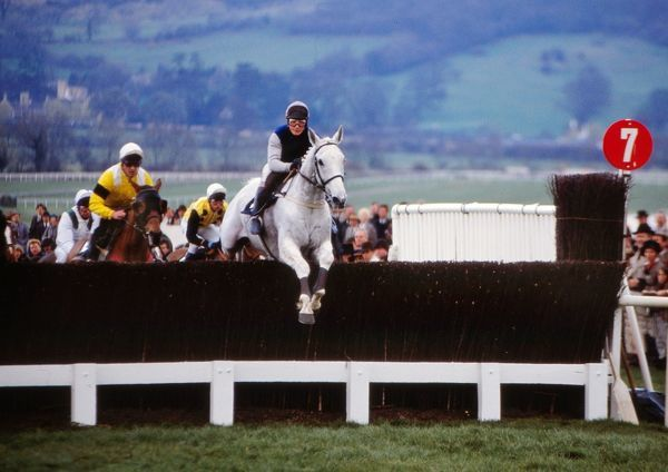 National Hunt Horse Racing - Cheltenham Festival 1990 - The Gold Cup Desert Orchid in action in the Gold Cup