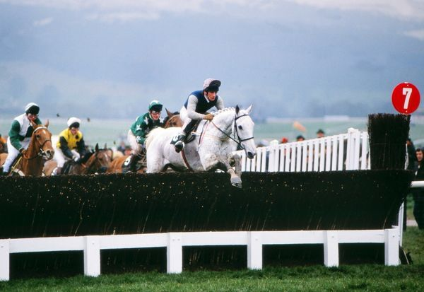 National Hunt Horse Racing - Cheltenham Festival 1989 - The Gold Cup Desert Orchid ridden by Simon Sherwood on their way to victory