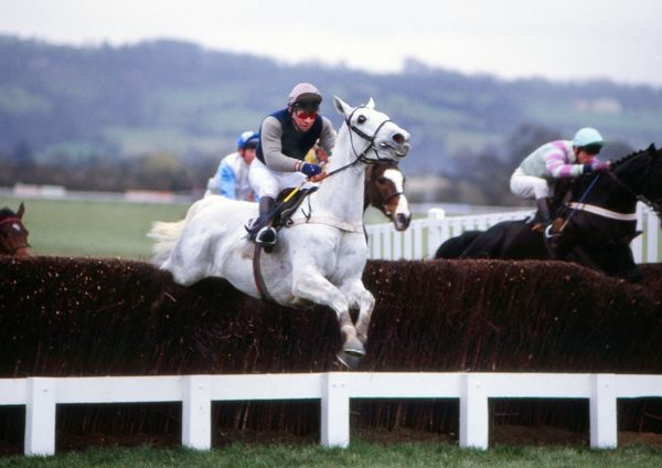 National Hunt Horse Racing - Cheltenham Festival 1988 - The Queen Mother Champion Steeplechase Desert Orchid ridden by Colin Brown jumping a fence