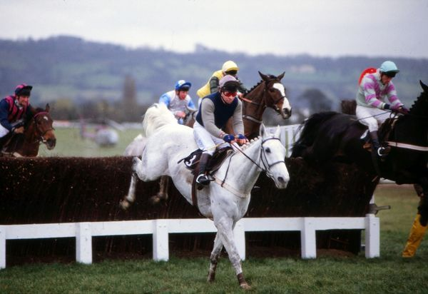 National Hunt Horse Racing - Cheltenham Festival 1988 - The Queen Mother Champion Steeplechase Desert Orchid ridden by Colin Brown on their way to victory