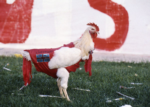 Football - 1984 European Cup Final - Liverpool 1* Roma 1 (*won 4-2 on pen a.e.t.)     A chicken decked out in Liverpool colours ('Liverpollo'), at the Stadio Olimpico, Rome.     30/05/1984