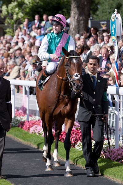 Horse Racing - Ebor Festival 2012 - York Racecourse Frankel, ridden by Tom Queally in the parade ring before the Juddmonte International Stakes