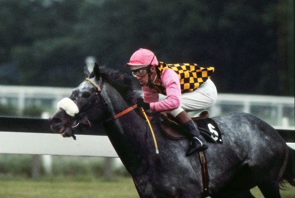 Horse racing : Warpath ridden by Edward 'Eddie' Hide in the colours of Guy Reed. Prince of Wales stakes.Ascot 19/06/1973 Credit: Colorsport