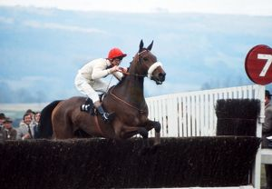 David Mould on Even Sail at the 1974 Cheltenham Festival